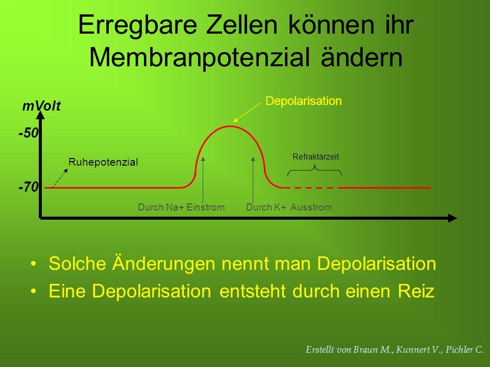 Erregbare Zellen können ihr Membranpotenzial ändern