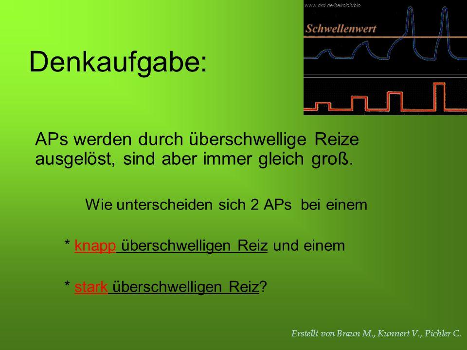 www.drd.de/helmich/bio Denkaufgabe: APs werden durch überschwellige Reize ausgelöst, sind aber immer gleich groß.