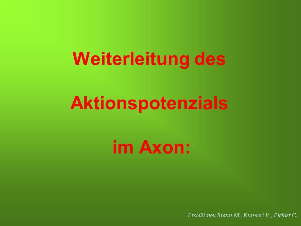 Weiterleitung des Aktionspotenzials im Axon: