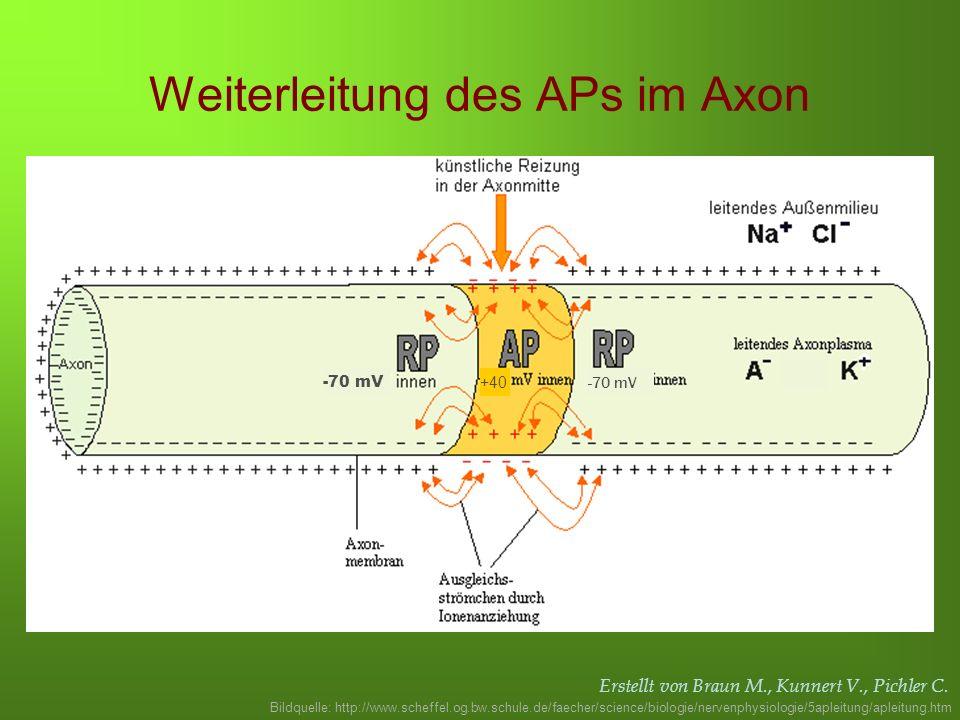 Weiterleitung des APs im Axon