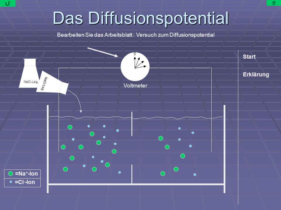 Das Diffusionspotential