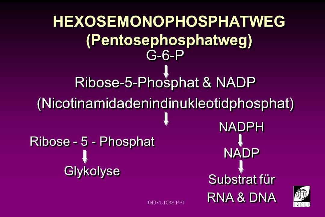 HEXOSEMONOPHOSPHATWEG (Pentosephosphatweg)