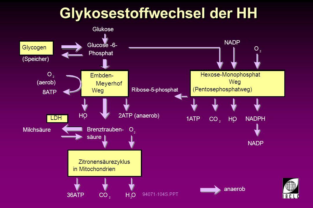 Glykosestoffwechsel der HH