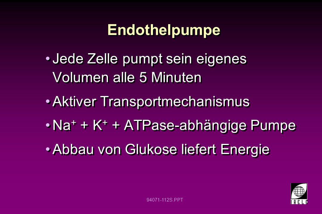 Endothelpumpe Jede Zelle pumpt sein eigenes Volumen alle 5 Minuten