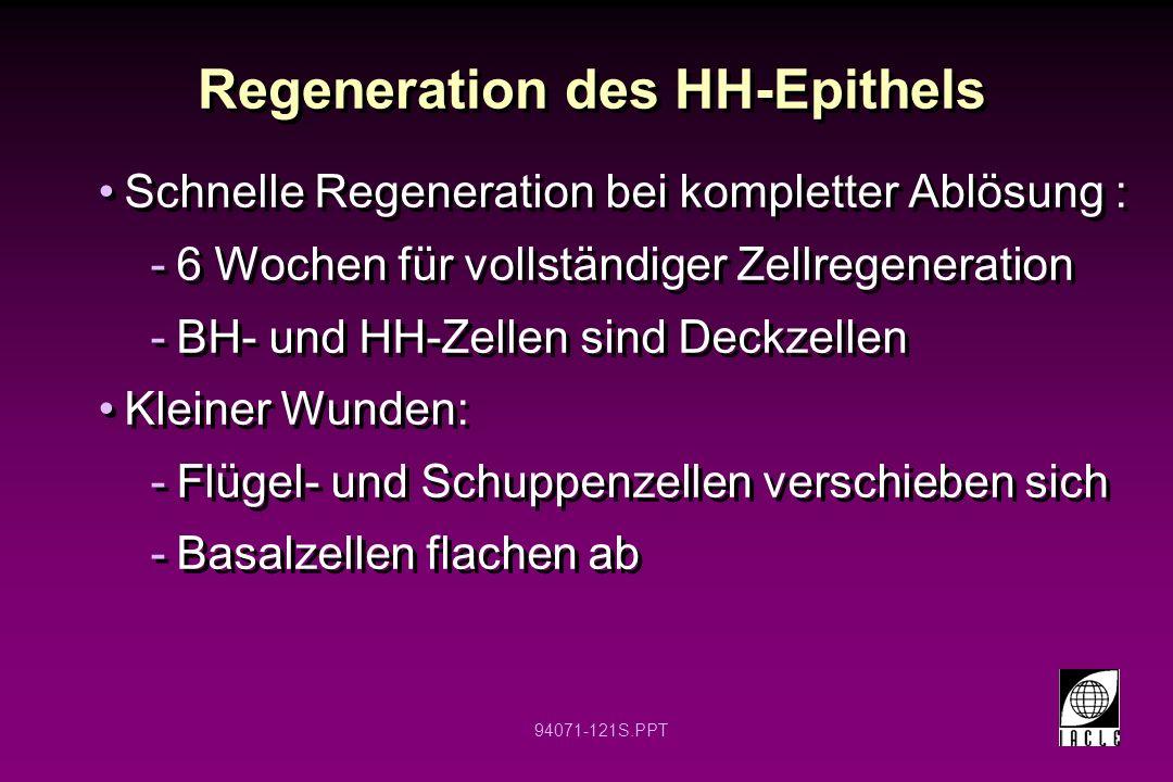 Regeneration des HH-Epithels