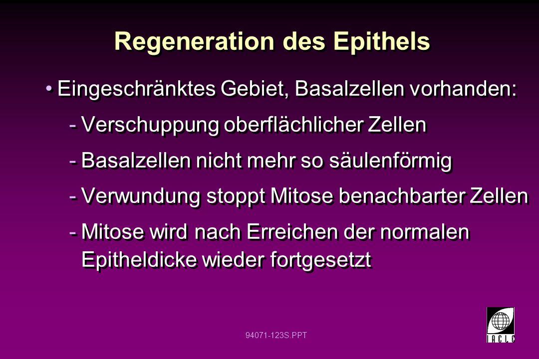 Regeneration des Epithels