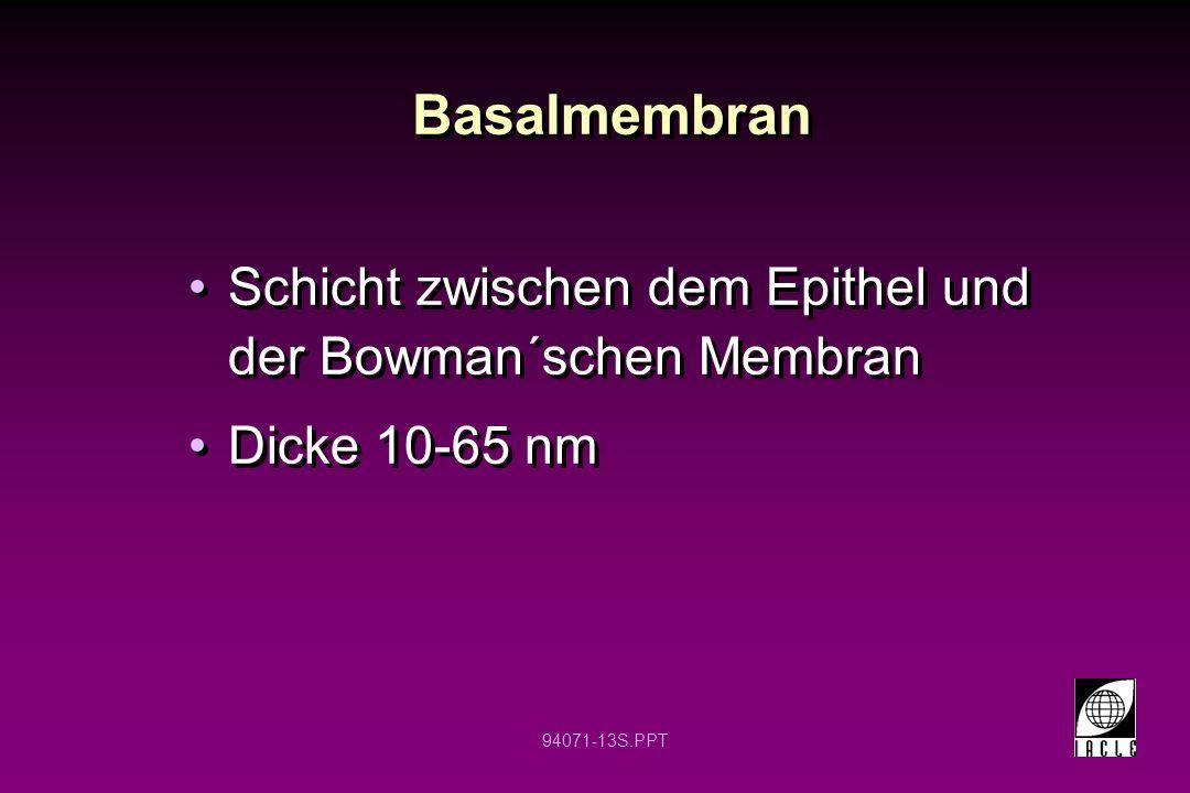 Basalmembran Schicht zwischen dem Epithel und der Bowman´schen Membran