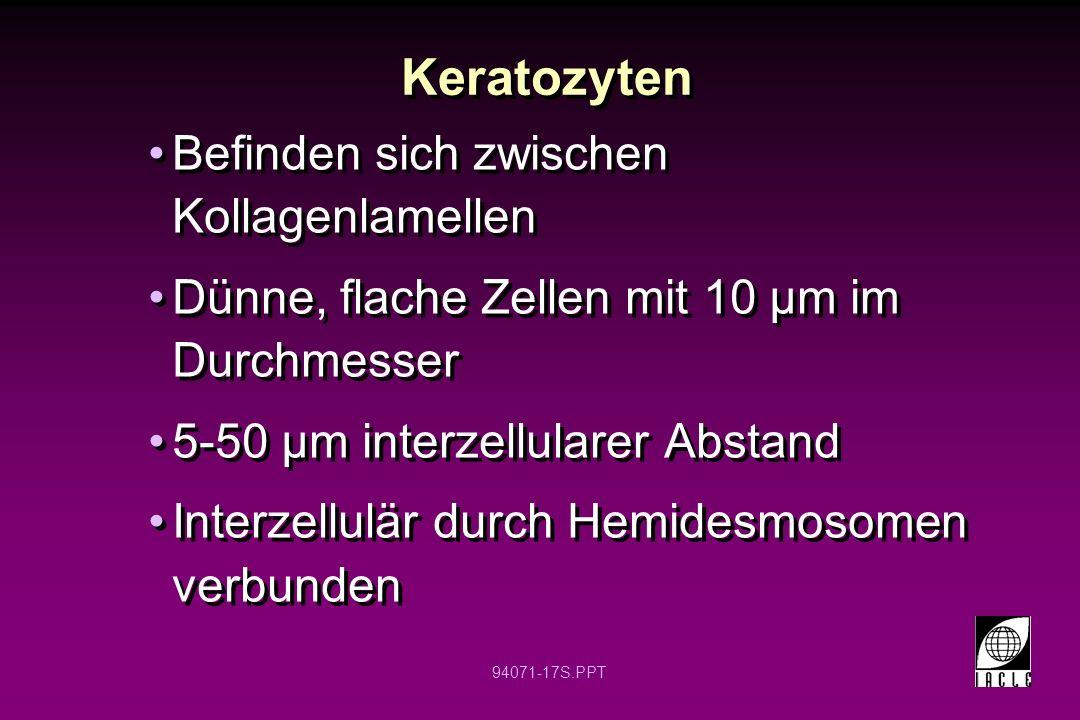 Keratozyten Befinden sich zwischen Kollagenlamellen