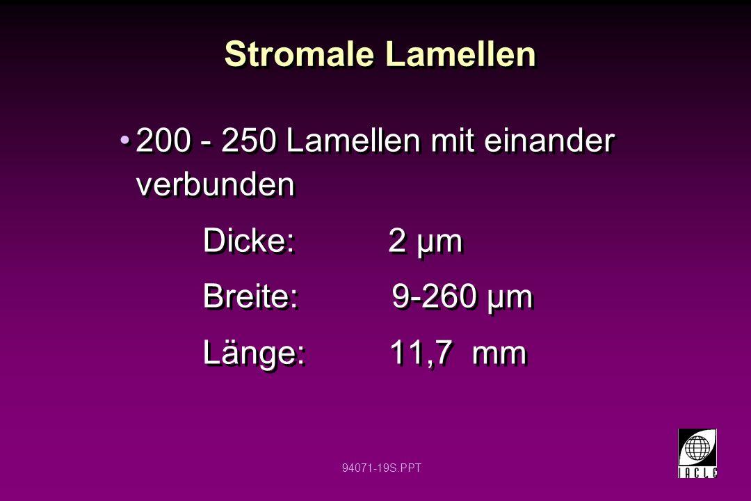 Stromale Lamellen 200 - 250 Lamellen mit einander verbunden
