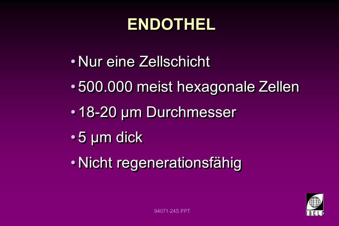 ENDOTHEL Nur eine Zellschicht 500.000 meist hexagonale Zellen