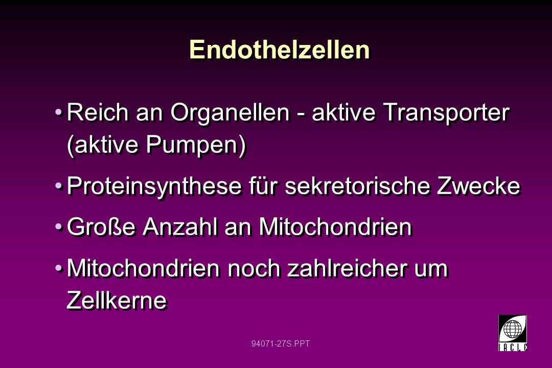 Endothelzellen Reich an Organellen - aktive Transporter (aktive Pumpen) Proteinsynthese für sekretorische Zwecke.