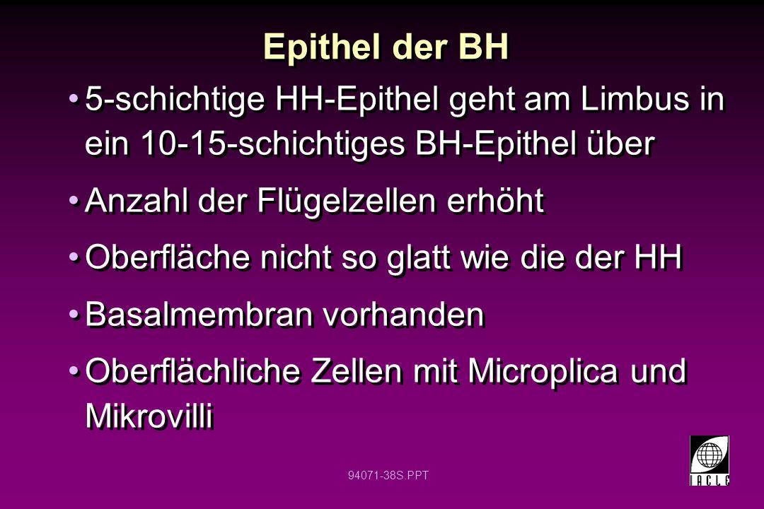 Epithel der BH 5-schichtige HH-Epithel geht am Limbus in ein 10-15-schichtiges BH-Epithel über. Anzahl der Flügelzellen erhöht.