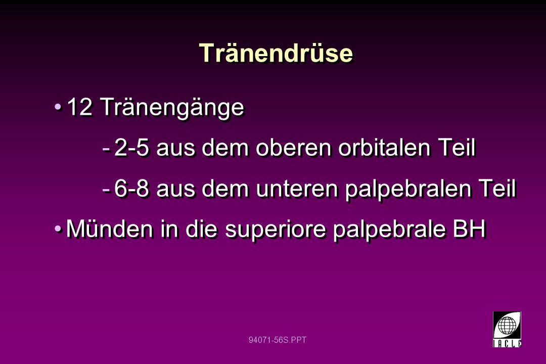 Tränendrüse 12 Tränengänge 2-5 aus dem oberen orbitalen Teil