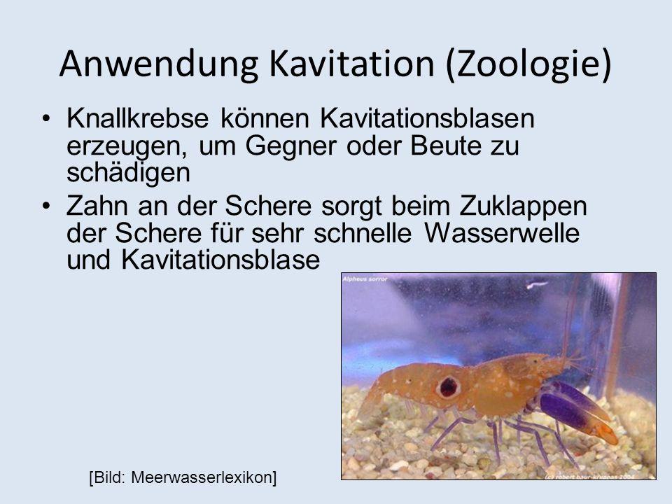 Anwendung Kavitation (Zoologie)