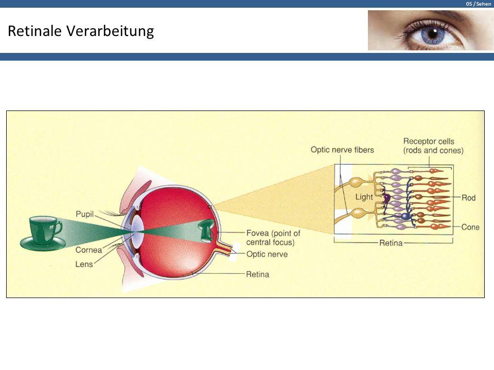 Retinale Verarbeitung