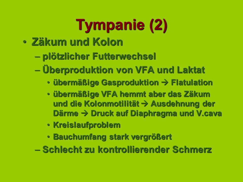 Tympanie (2) Zäkum und Kolon plötzlicher Futterwechsel