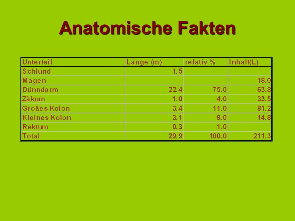 Anatomische Fakten