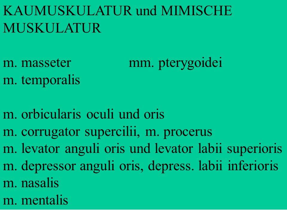 KAUMUSKULATUR und MIMISCHE MUSKULATUR