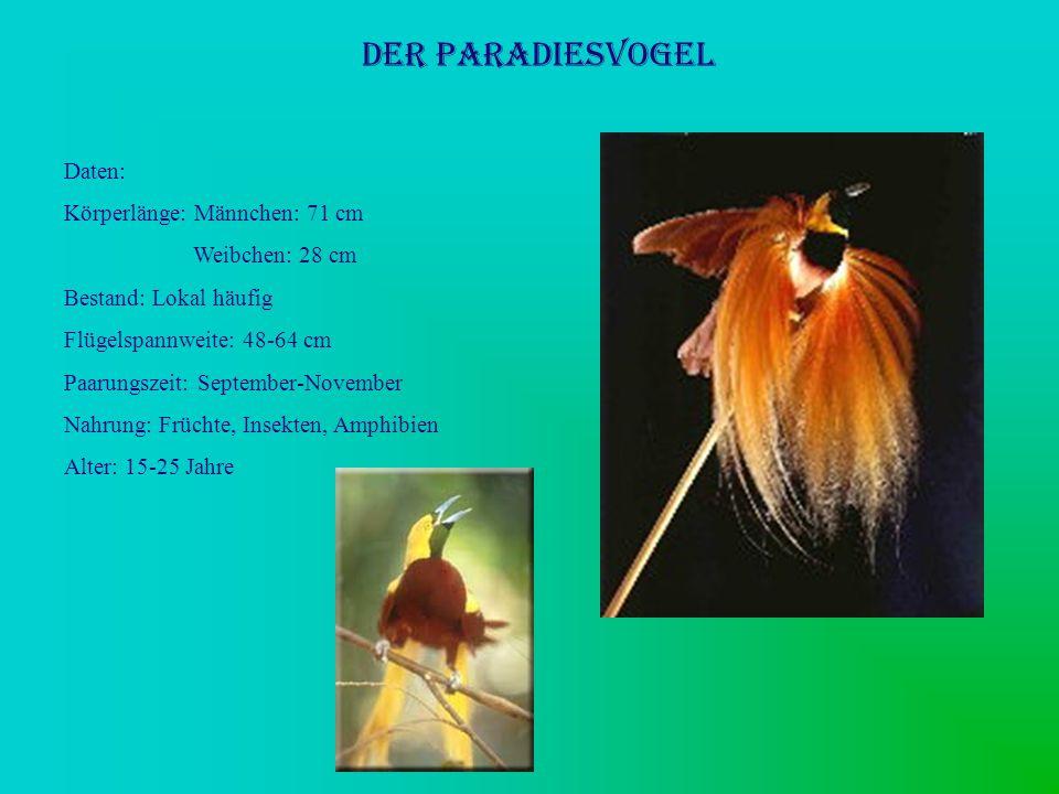 Der Paradiesvogel Daten: Körperlänge: Männchen: 71 cm Weibchen: 28 cm