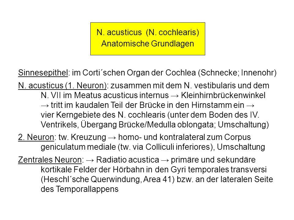 N. acusticus (N. cochlearis) Anatomische Grundlagen