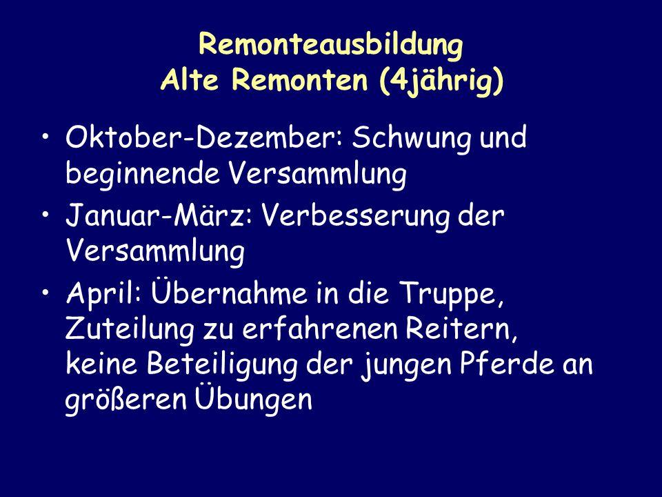 Remonteausbildung Alte Remonten (4jährig)