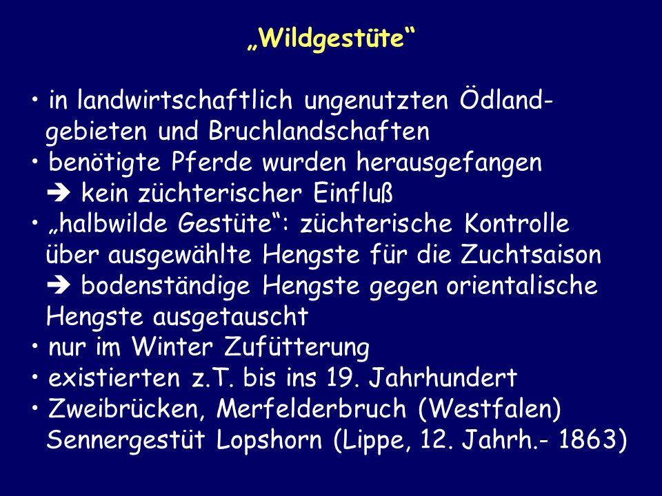 """""""Wildgestüte in landwirtschaftlich ungenutzten Ödland- gebieten und Bruchlandschaften."""