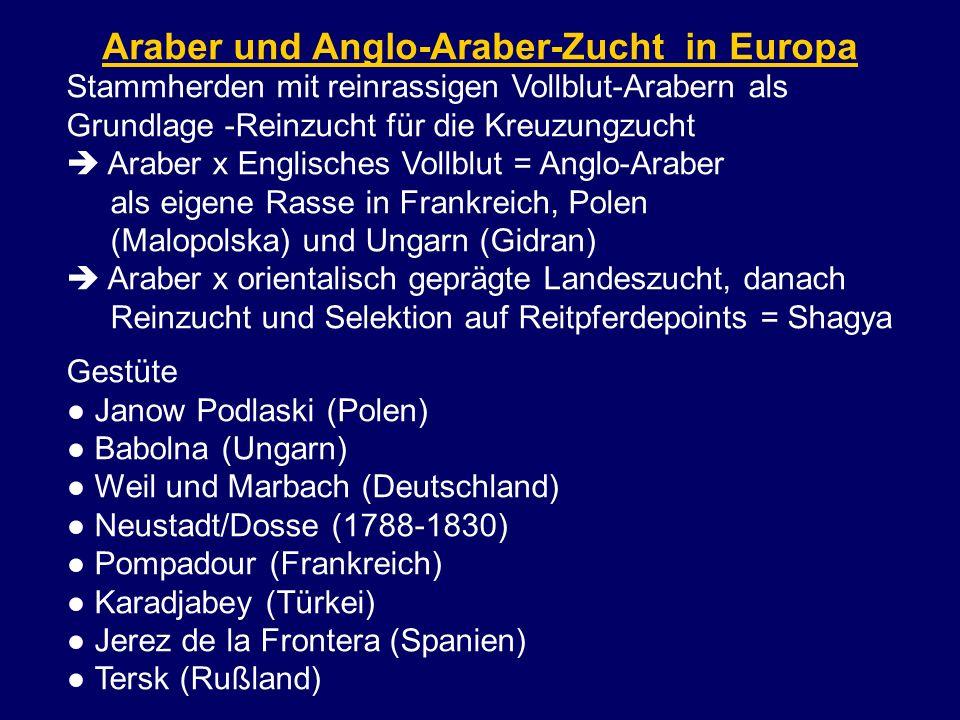 Araber und Anglo-Araber-Zucht in Europa