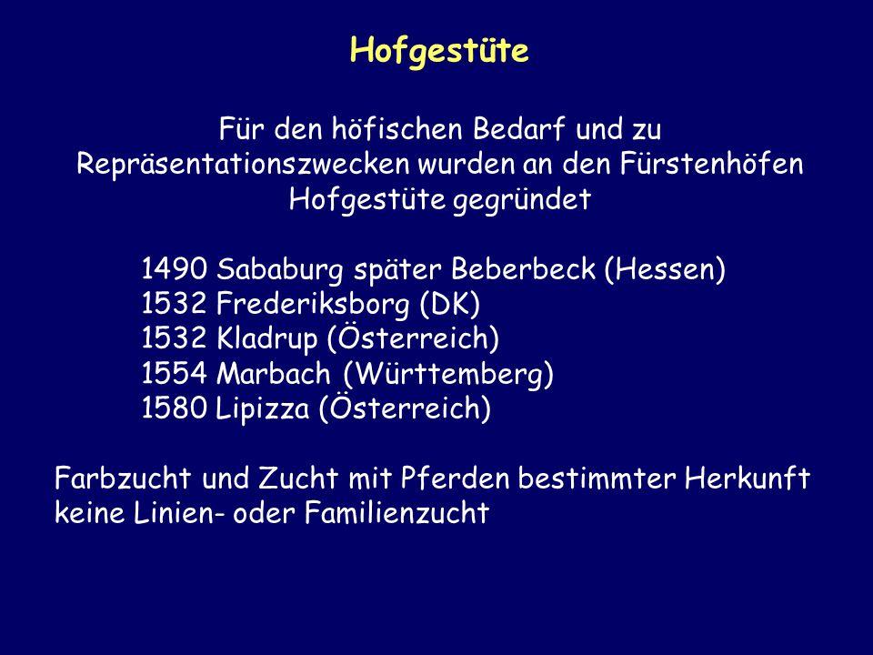Hofgestüte Für den höfischen Bedarf und zu Repräsentationszwecken wurden an den Fürstenhöfen Hofgestüte gegründet.