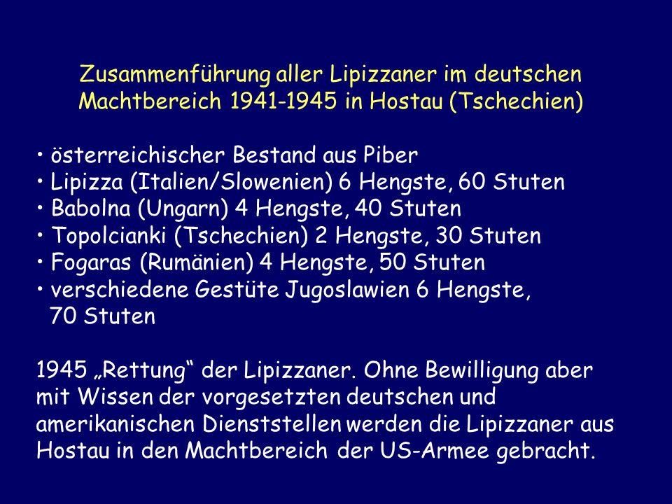 Zusammenführung aller Lipizzaner im deutschen Machtbereich 1941-1945 in Hostau (Tschechien)