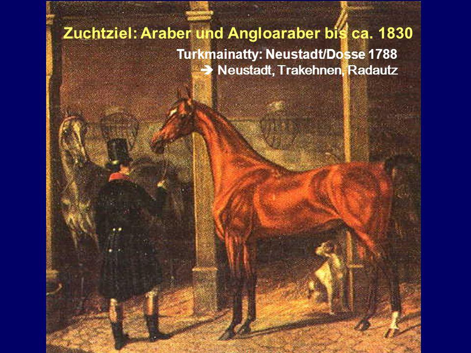 Zuchtziel: Araber und Angloaraber bis ca. 1830