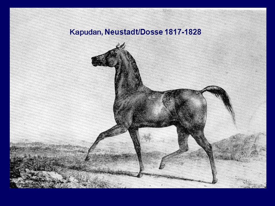 Kapudan, Neustadt/Dosse 1817-1828