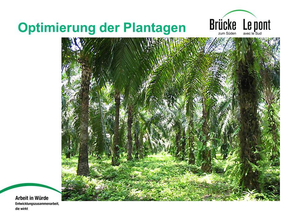 Optimierung der Plantagen