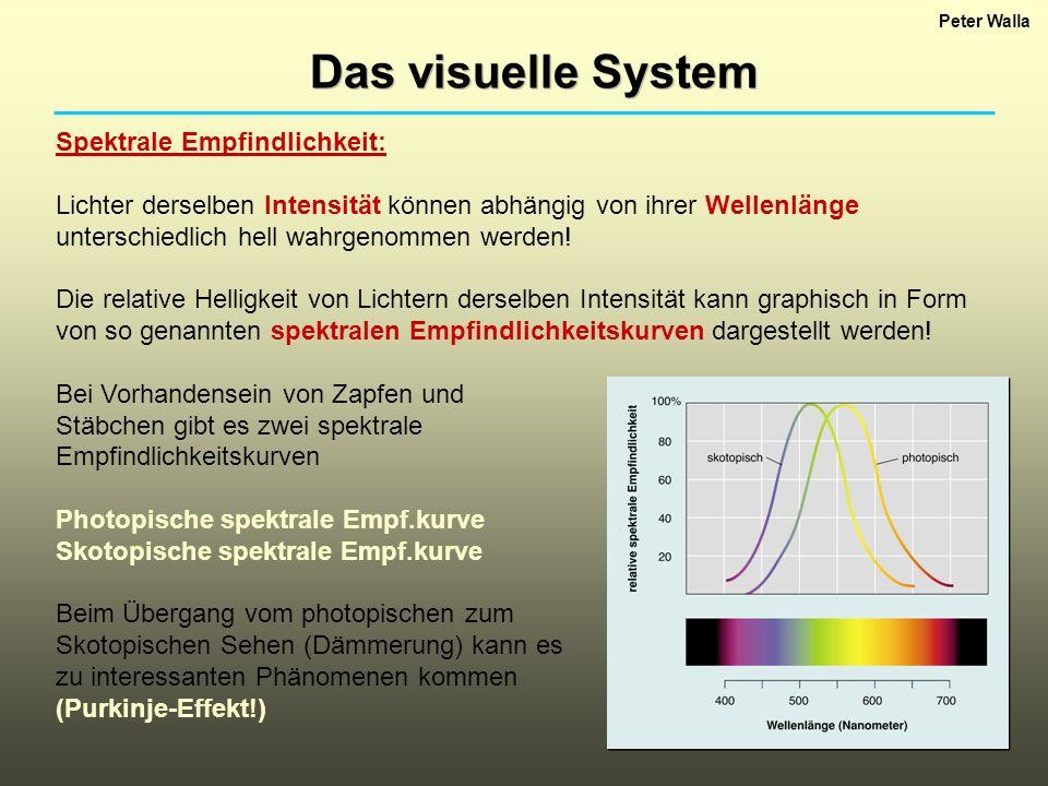 Das visuelle System Spektrale Empfindlichkeit: