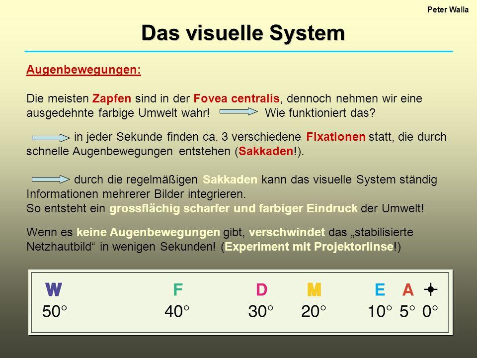 Das visuelle System Augenbewegungen: