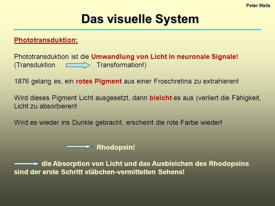 Das visuelle System Phototransduktion: