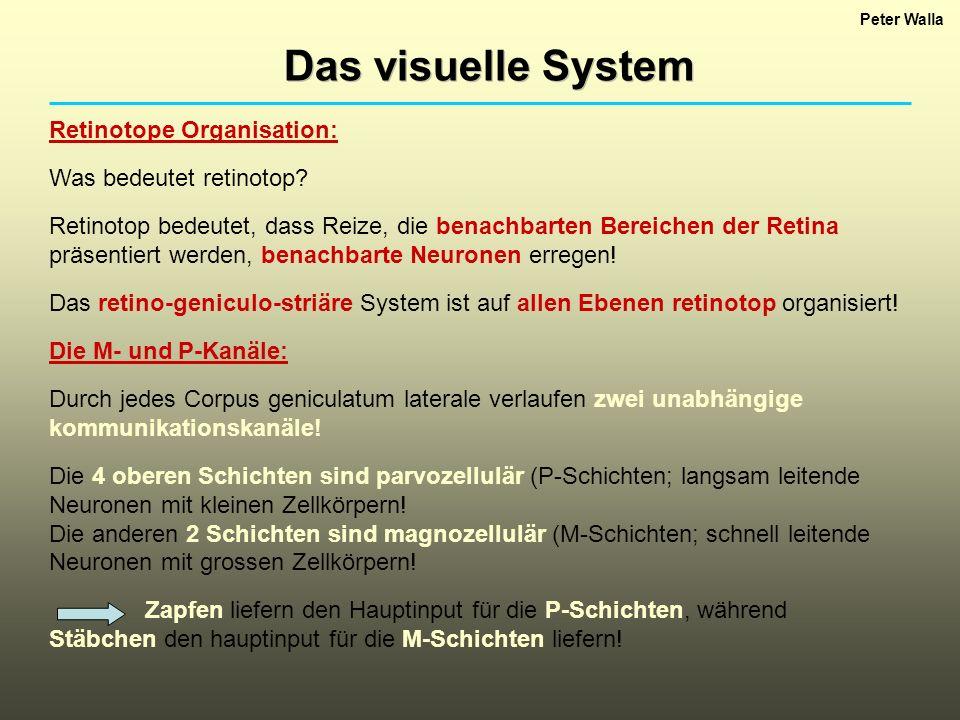 Das visuelle System Retinotope Organisation: Was bedeutet retinotop