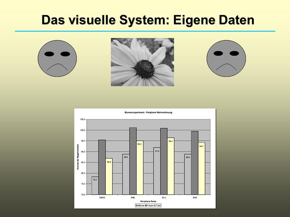 Das visuelle System: Eigene Daten