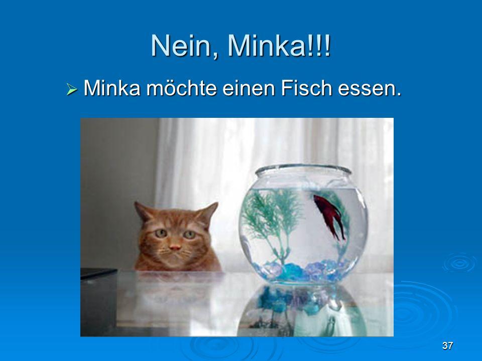 Nein, Minka!!! Minka möchte einen Fisch essen.