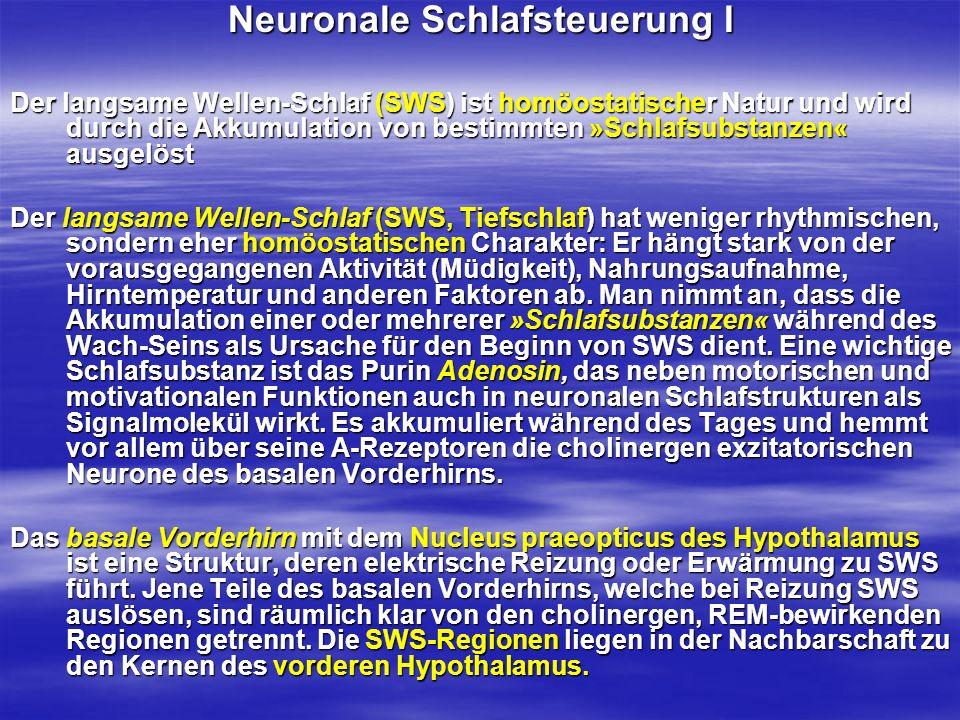 Neuronale Schlafsteuerung I