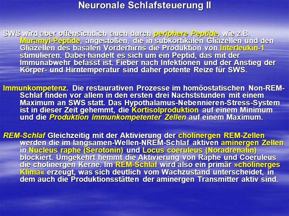 Neuronale Schlafsteuerung II