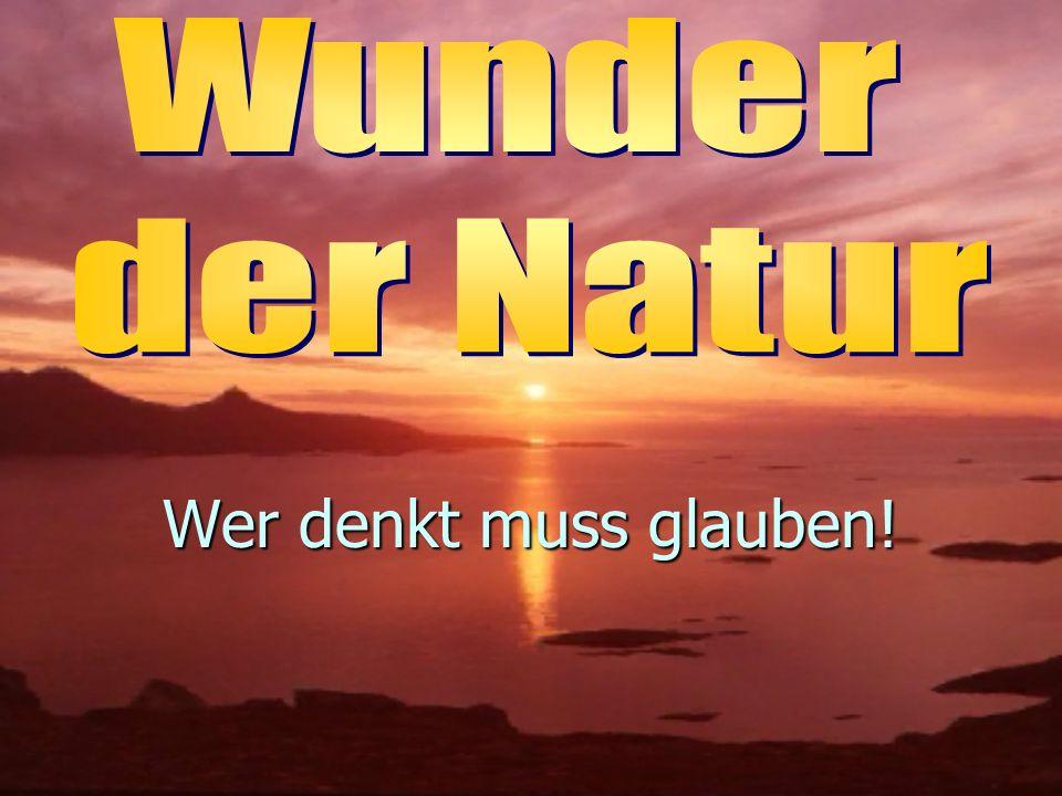 Wunder der Natur Wer denkt muss glauben!