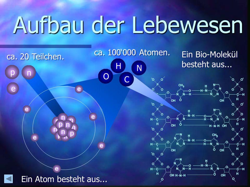 Aufbau der Lebewesen ca. 100'000 Atomen. Ein Bio-Molekül