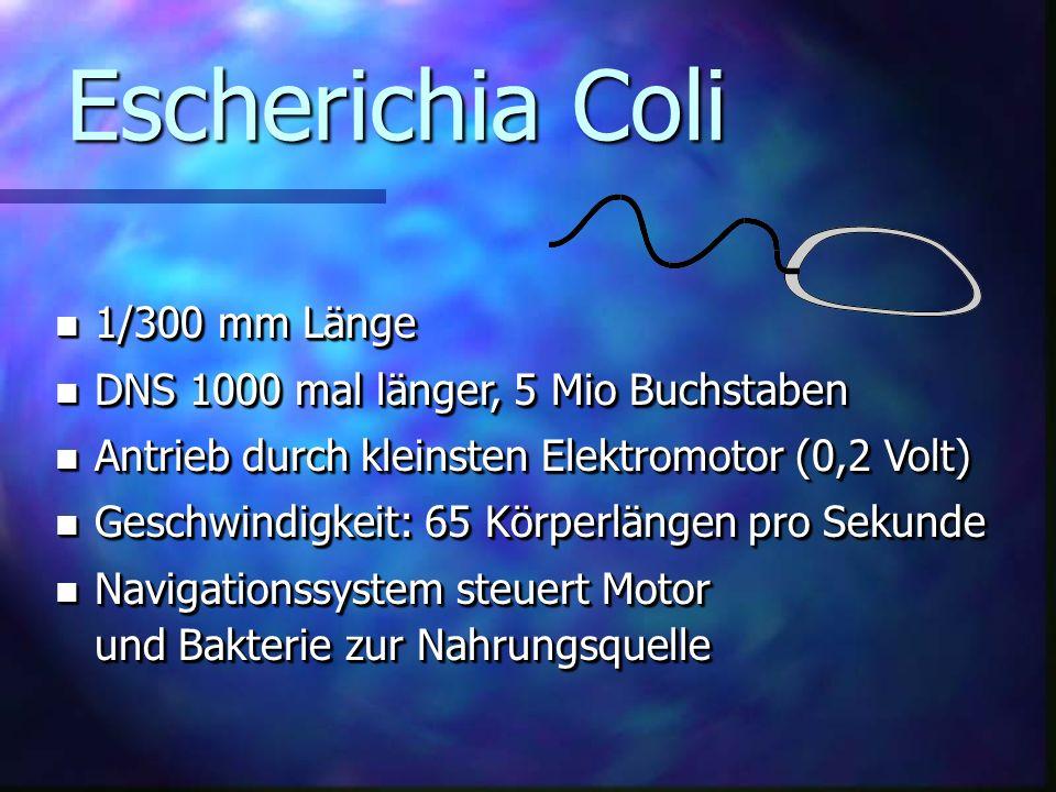 Escherichia Coli 1/300 mm Länge DNS 1000 mal länger, 5 Mio Buchstaben