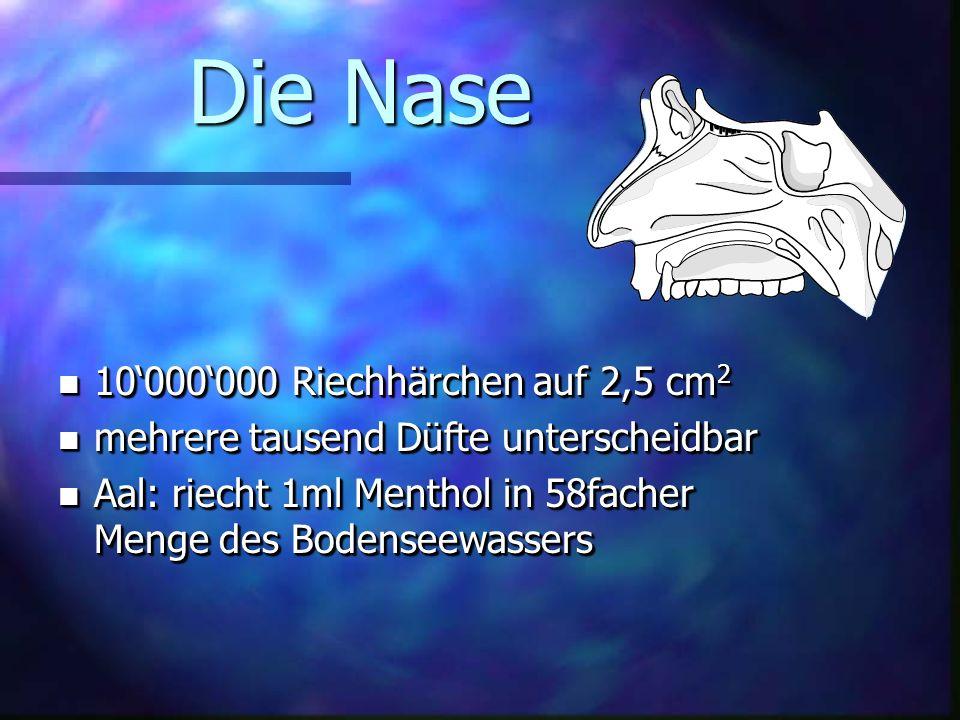 Die Nase 10'000'000 Riechhärchen auf 2,5 cm2