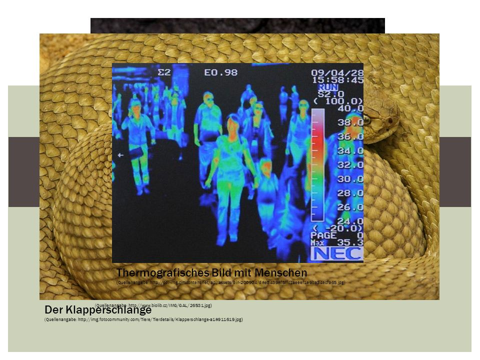 EINLEITUNG Thermografisches Bild mit Menschen Der Hafer Das Maus
