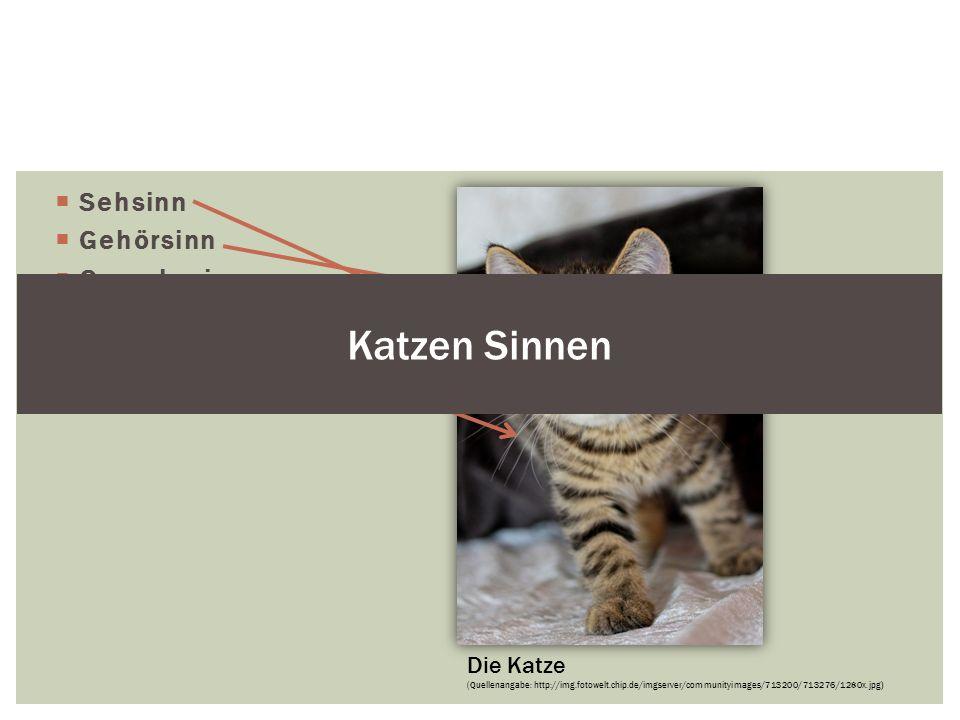 Katzen Sinnen Sehsinn Gehörsinn Geruchssinn Tastsinn Geschmackssinn.