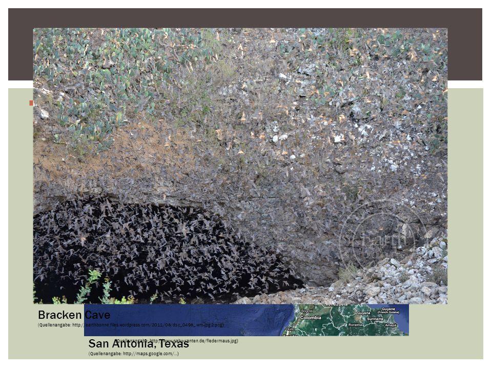 Die pledermaus Echoortung Die Echoortung von Fledermäusen Bracken Cave
