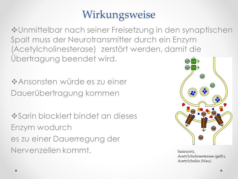 botulinumtoxin wirkung an der synapse