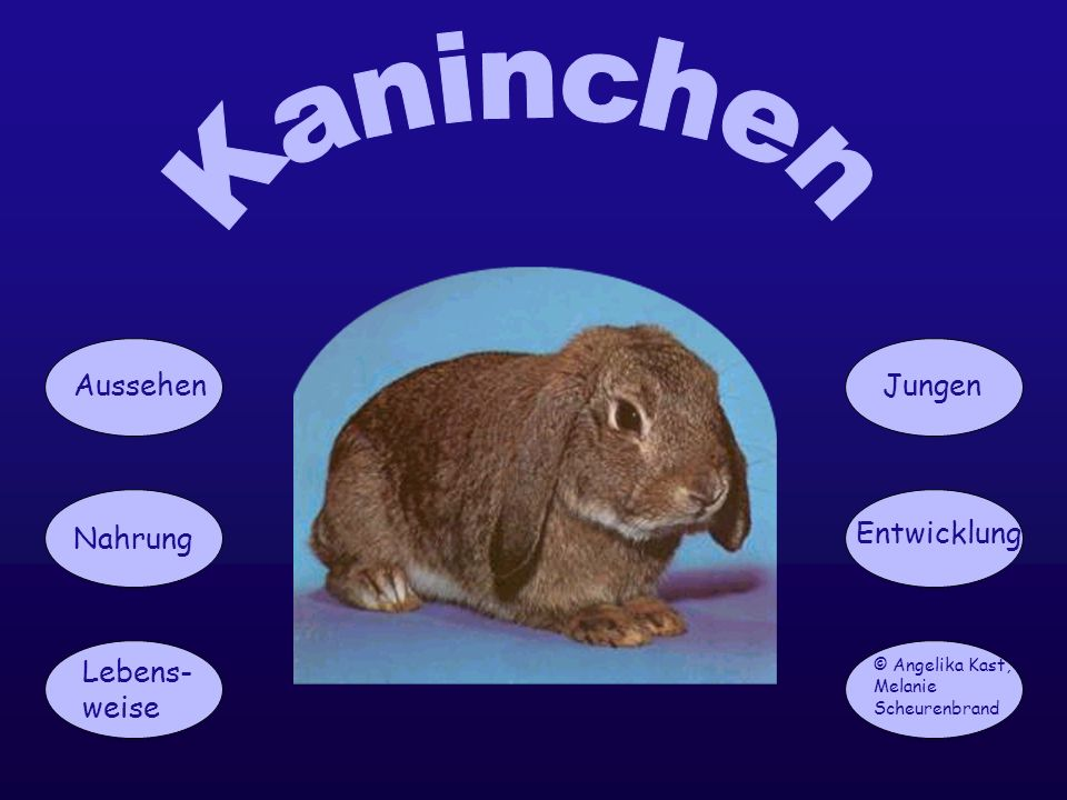 Kaninchen Aussehen Jungen Nahrung Entwicklung Lebens-weise