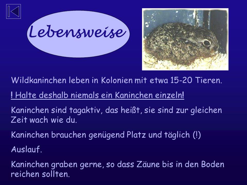 Lebensweise Wildkaninchen leben in Kolonien mit etwa 15-20 Tieren.